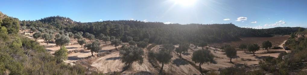 Boerin Spanje
