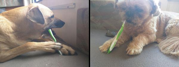 Honden poetsen hun tanden